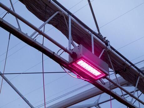 """BloemenPlantenNieuws: """"Uiteindelijk gaat iedereen over op watergekoelde LED-belichting""""."""