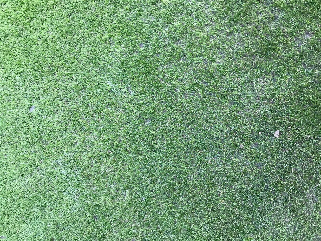 CASE STUDY: LED lighting stadium grass at football club NAC Breda