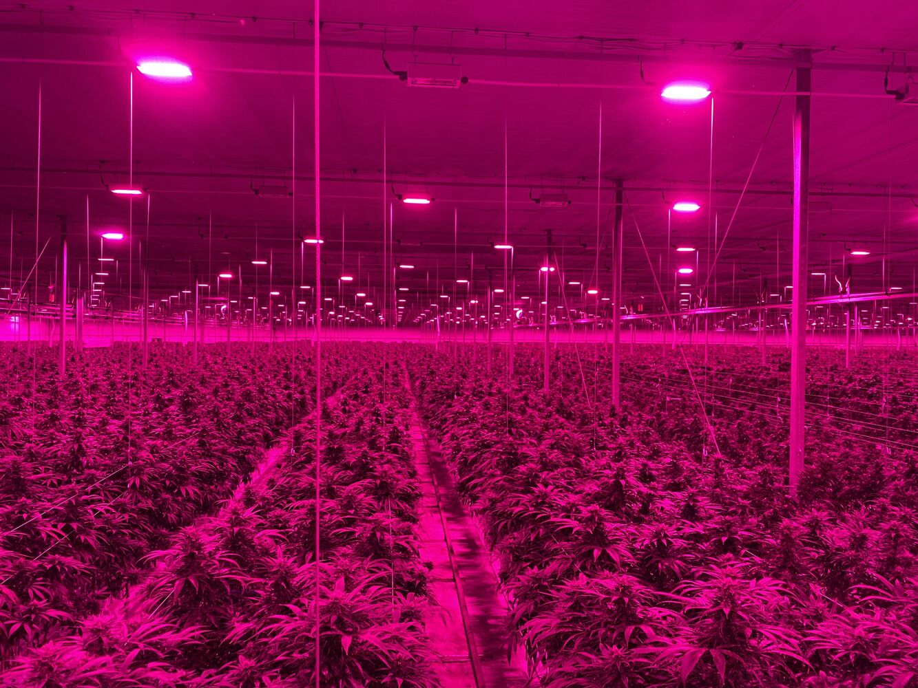 Greenhouse Canada: Lighting and curtain technologies curb light pollution, stabilize greenhouse climate