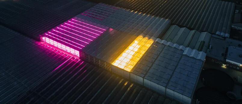 GroentenNieuws: Het finetunen voor de LED subsidieregeling is begonnen