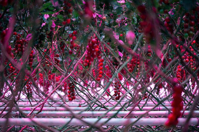 High-wire crops
