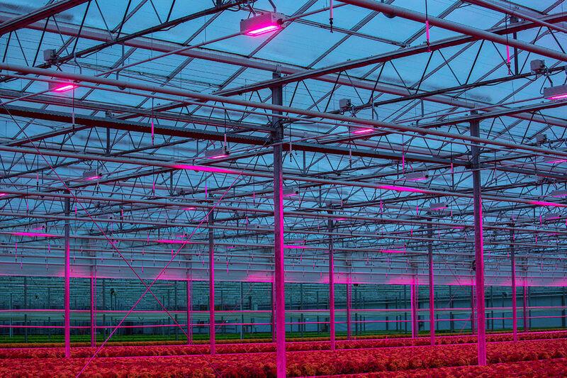 Horticulture LED lights