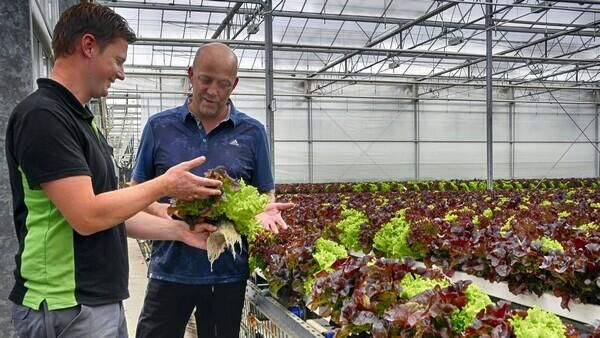 HortiDaily: Semi-closed greenhouse next step for innovative lettuce growers