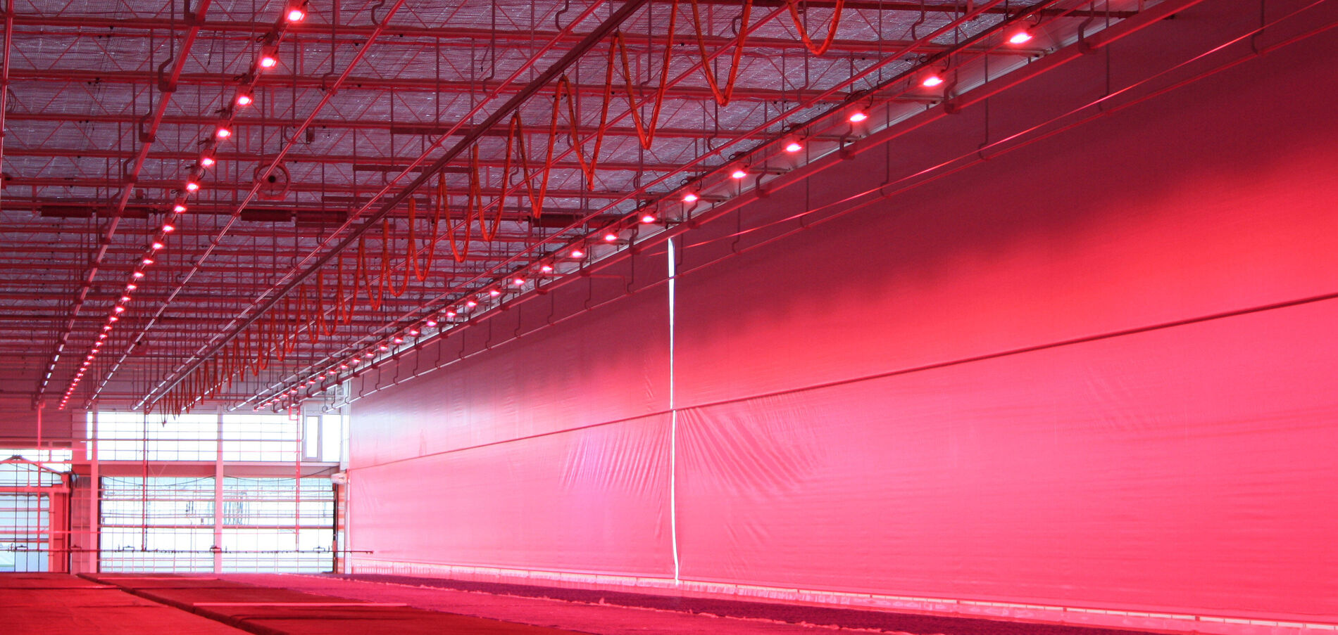 HortiDaily: Water cooled LED to cope with heat and humidity trapped under energy screens designed to limit light emission