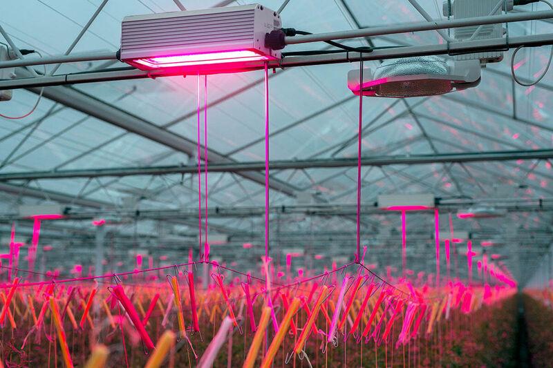 LED lights for vegetables