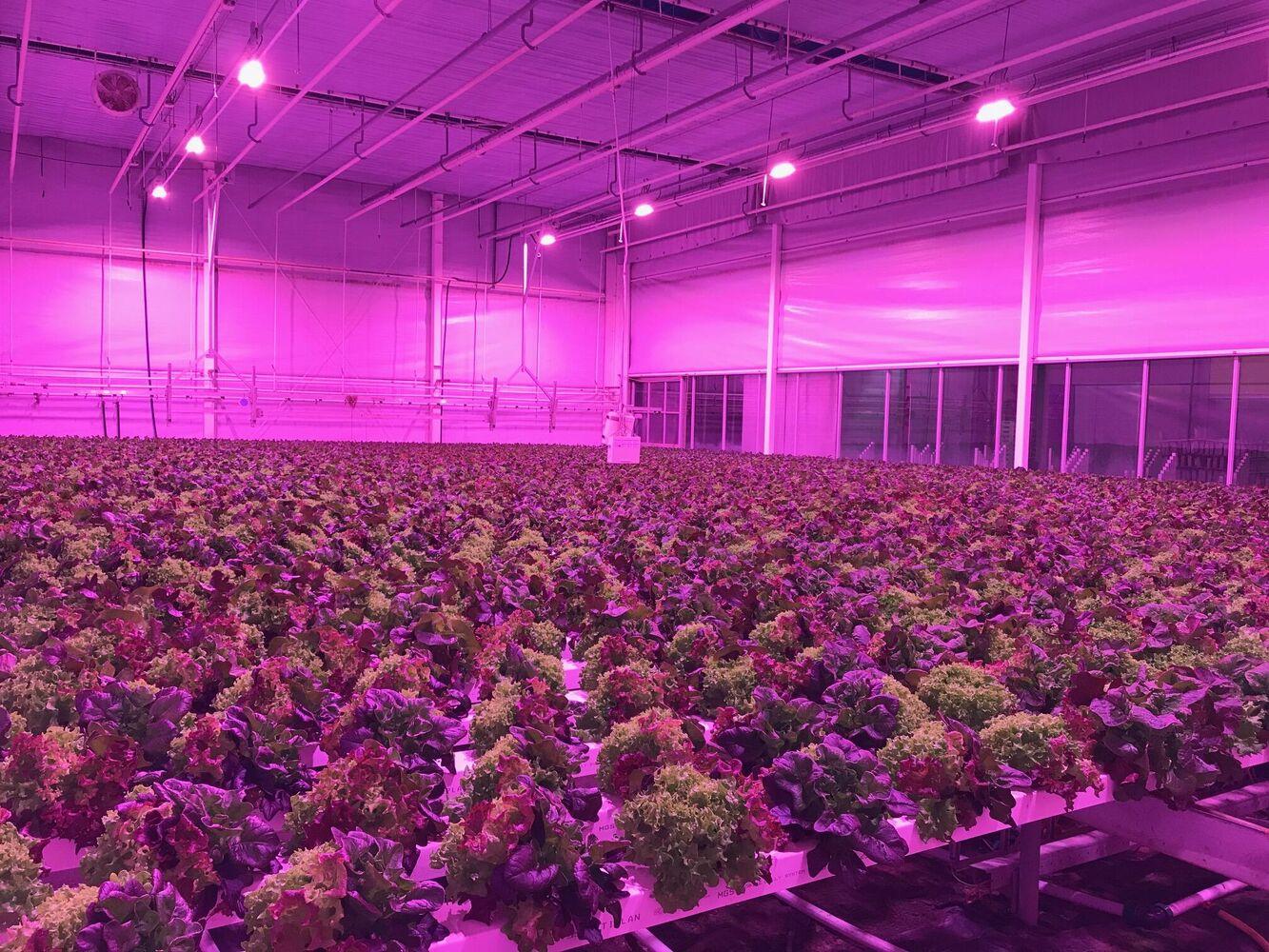 Oreon installeert LED verlichting bij PSKW voor innovatieproject 'Benutting van laagwaardige warmte'