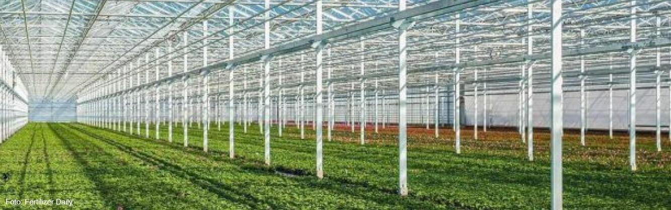 Oreon levert LED-armaturen aan twee Russische greenhouses