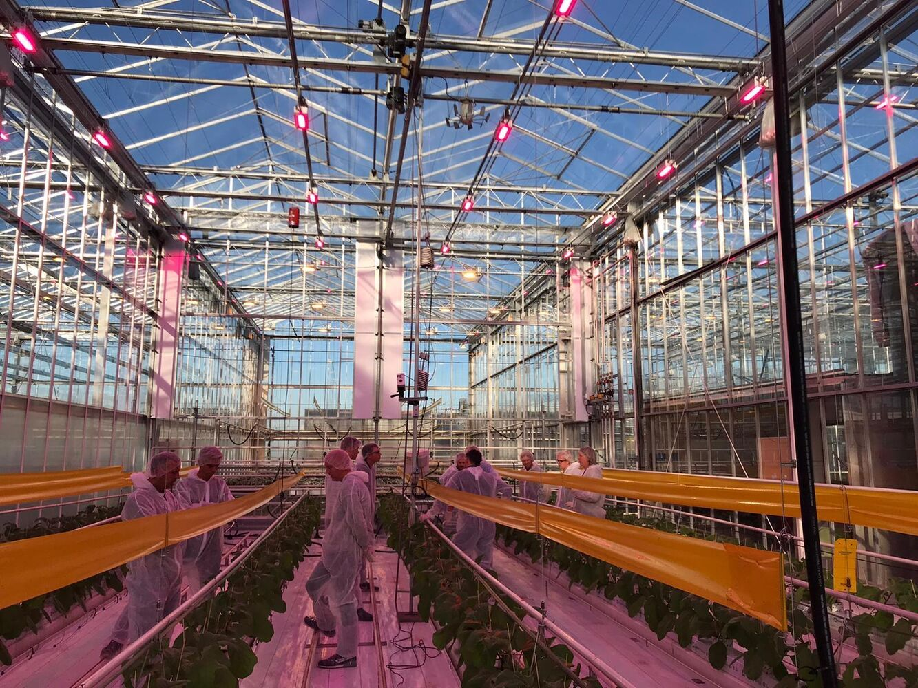 Oreon participeert in 'aubergine jaarrond in balans met LED' project op het Delphy Improvement Centre