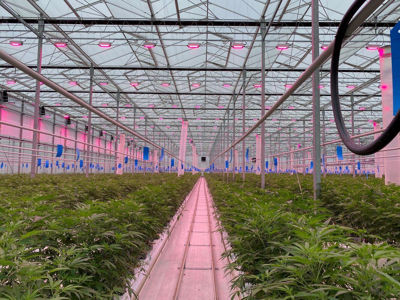 PERSBERICHT: Tuinbouw-multinationals en wetenschap delen cannabis-kennis in Legal Cannabis Coalition
