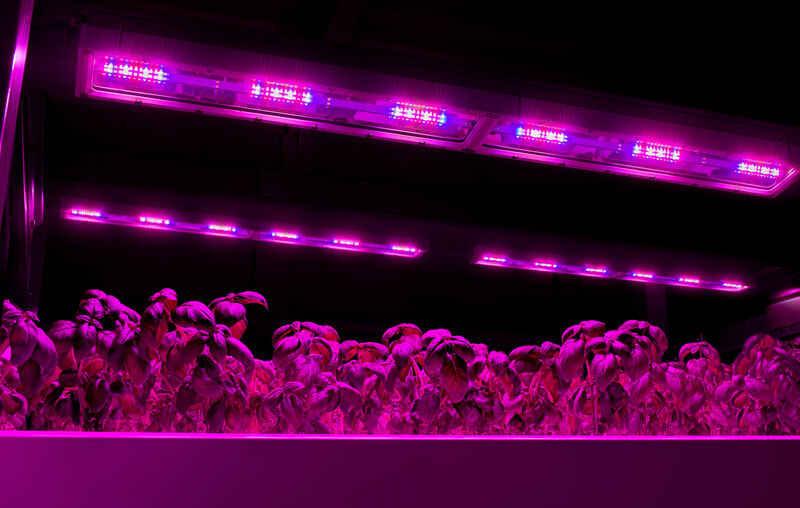 Vertical farming with LED grow lights