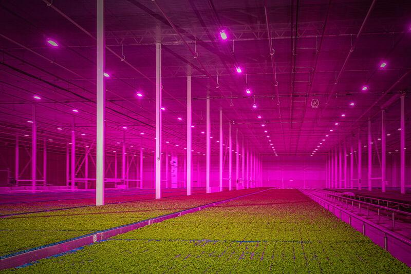 Watergekoelde LED grow lights